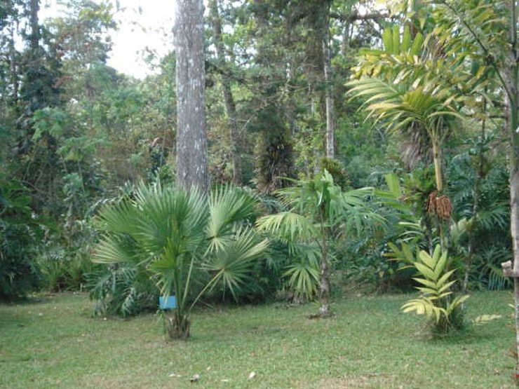 Hikers Can Take It Easy In Lankester Botanical Gardens Go Visit Costa Rica