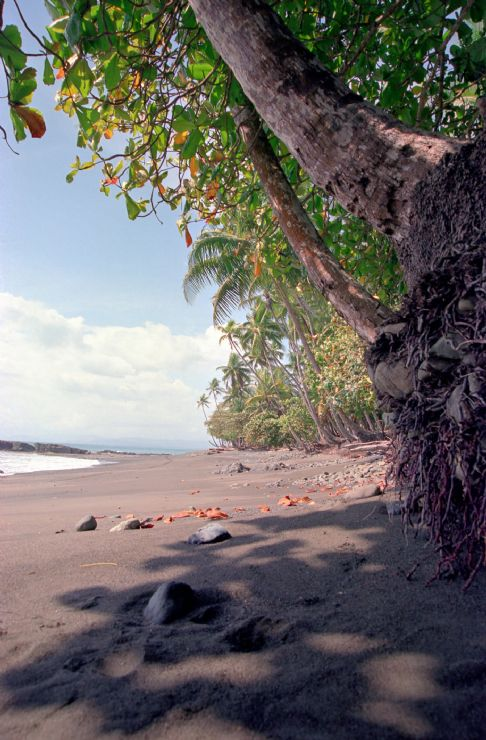 Tropical Palm Lined Beach in Costa Rica