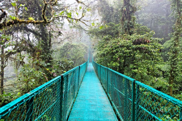 Hanging Bridge over the forest canopy in Monteverde