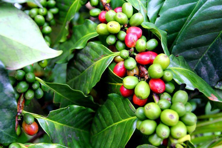 Costa Rica's Golden Bean - Javi's Travel Blog - Go Visit Costa Rica