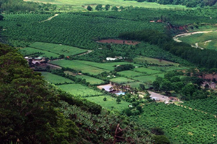Coffee plantations in the Orosi Valley
