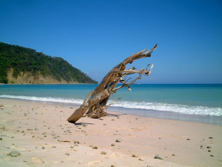 Beach with dead tree in Montezuma
