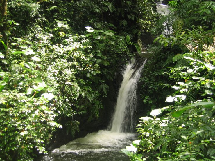 Magnificent forest waterfall at Monteverde