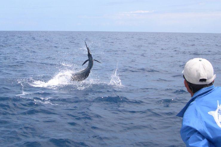 Experience sportfishing at los sue os resort javi 39 s for Deep sea fishing costa rica