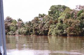 Ca�o Negro River - Ca�o Negro National Wildlife Refuge, Alajuela