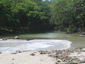 Estuary in Mal Pais - Mal Pais, North Puntarenas
