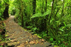 Trail at Monteverde Cloud Forest Reserve