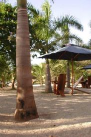 Playa Avallana Beachfront Bar with Palm Trees - Playa Avellana, Guanacaste
