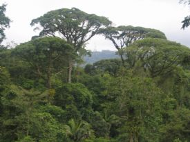 Canopy of Brauilo Carrillo National Park