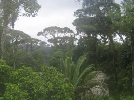 Brauilo Carrillo National Park - Braulio Carrillo National Park, Heredia