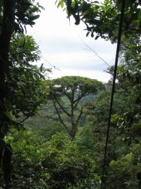 Brauilo Carrillo Canopy - Braulio Carrillo National Park, Heredia
