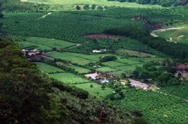Coffee plantations in the Orosi Valley - Orosi, Cartago