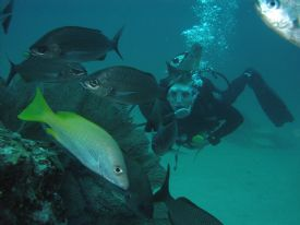 Scuba Diving in Cao Island