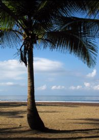 Early calm morning in Jaco - Jaco, North Puntarenas