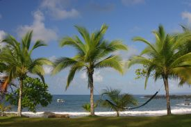 Palm Trees aligned on beach in Corcovado Nat. Park