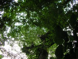 Looking up at a Platform on a Canopy Tour in Manuel Antonio - Manuel Antonio, North Puntarenas