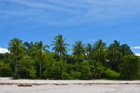 Tropical beach in Manuel Antonio - Manuel Antonio, North Puntarenas