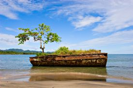 Old vessel with tree in Puerto Viejo