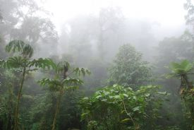 Monteverde Cloud Forest in the clouds