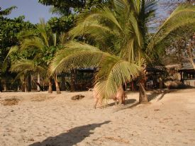 Playa Avellana Beach Pig - Playa Avellana, Guanacaste
