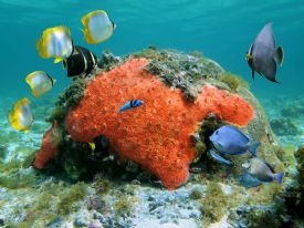 Beautiful sights of scuba diving or snorkeling in the Bocas del Toro, Panama