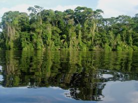 The calm waters of Tortuguero