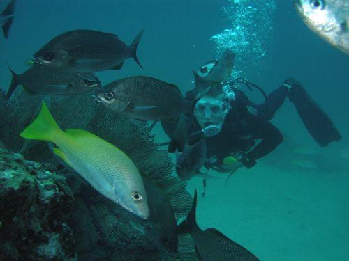 Scuba Diving in Caño Island