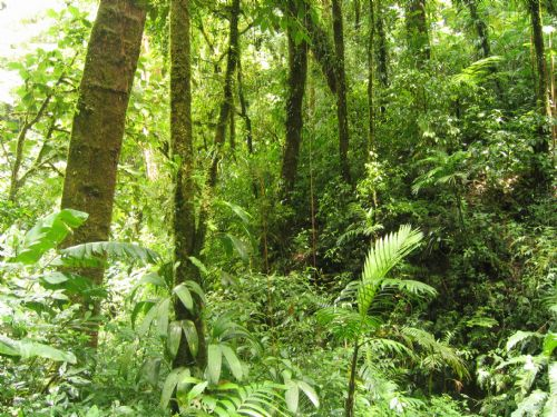 Beautiful green forest at Monteverde Cloud Forest Reserve