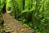 Explore Costa Rica by hiking in Monteverde Cloud Forest Reserve