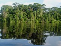 Sea life intermingled with the land makes Tortuguero an eco-tourist's dream