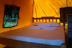 Inside Tent at Corcovado Adventures Tent Camp