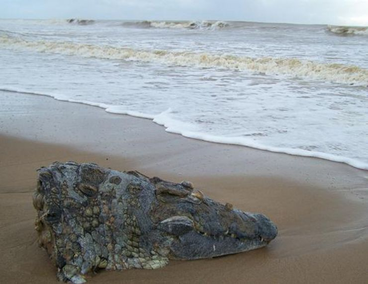 Prehistoric fish washed up on shore - photo#13