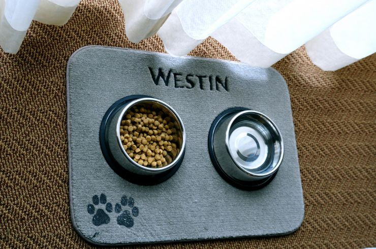 Pet food at hotel room