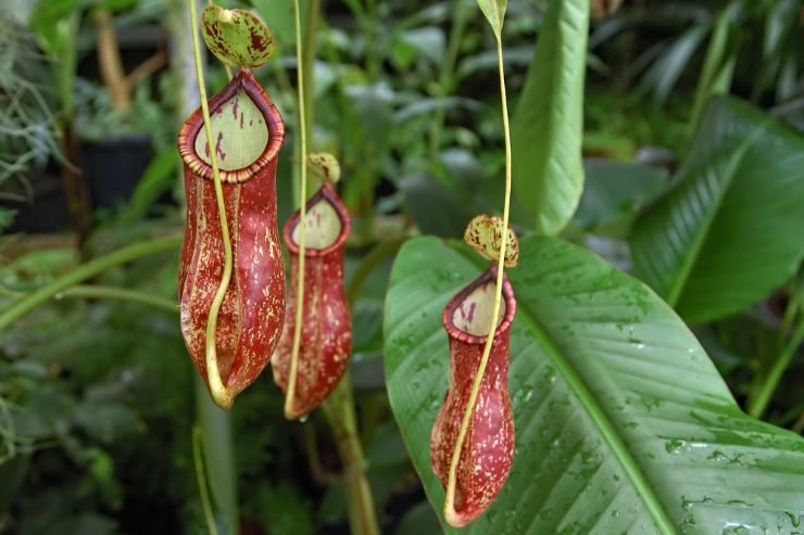 7 Strangest Rainforest Plants - Javi's Travel Blog - Go Visit ...