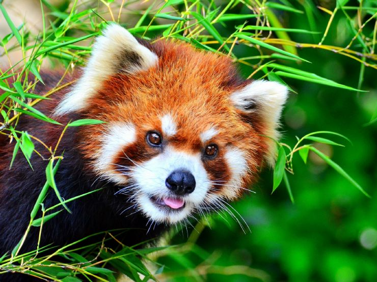 Affinity Credit Union >> 8 Overwhelming Swarms of Cute Animals that Could Totally ...