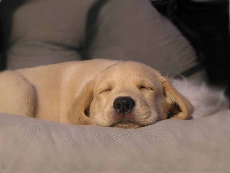 Cute Little Puppy Sleeping