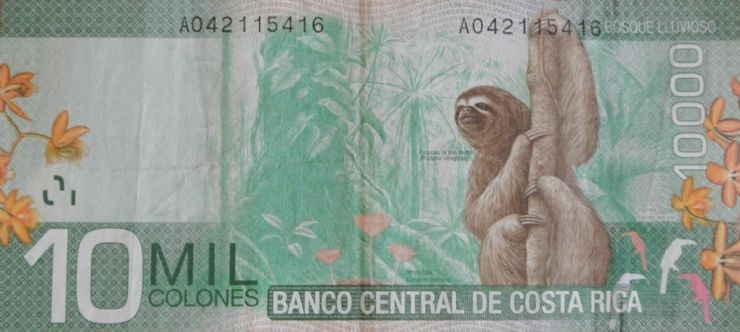 10 Thousand Colones - Back with Sloth in the Rain Forest
