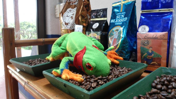 Javi the Frog inspecting roasted coffee