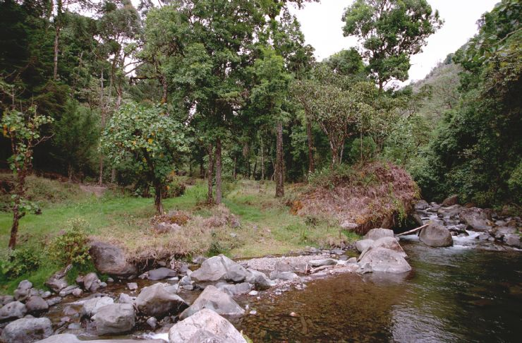 Beautiful River near Cartago