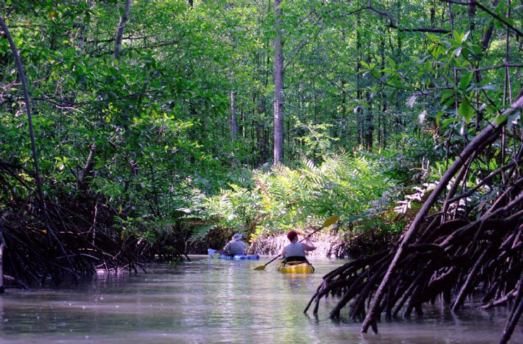 The best way to see the mangroves is on a kayak in Piedras Blancas National Park