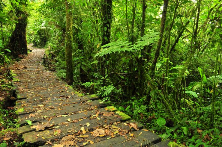 Trail at Monteverde Cloud Forest Reserve</a><br /><br /></td></tr>