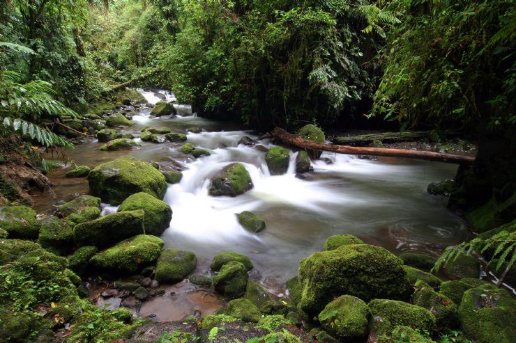 The calm waters of Tortuguero