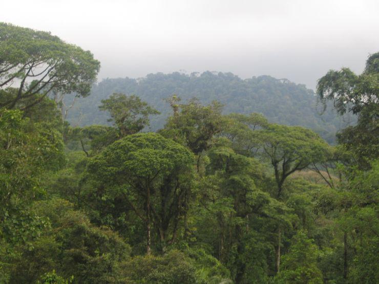 Braulio Carrillo National Park Costa Rica City Guide