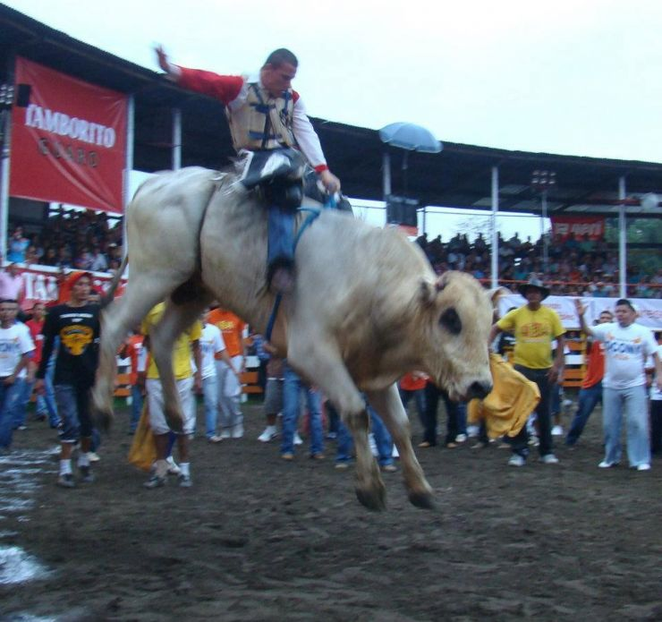 Amazing rodeo with bulls in Guanacaste