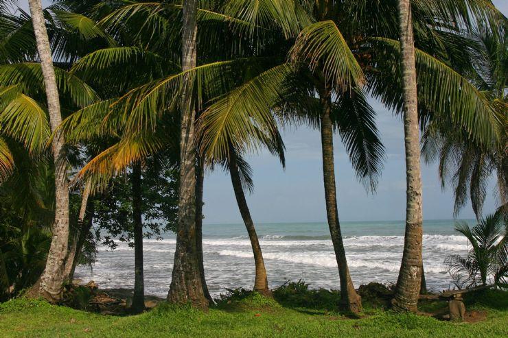 Cahuita - Palms & Ocean
