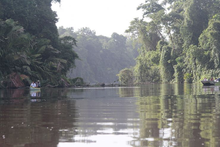 Canoeing Through Tortuguero National Park