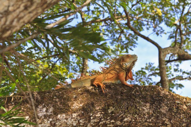 palo verde national park costa rica city guide go visit costa rica
