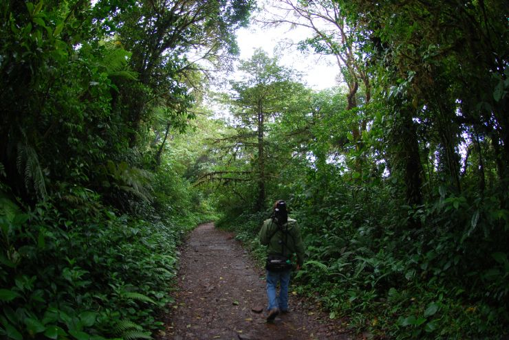 Guide looking for animals in the Monteverde Cloud Forest Reserve