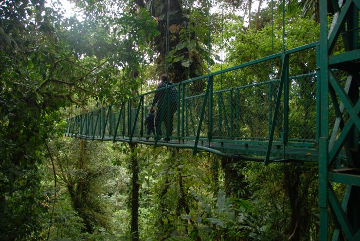 Hanging Bridge at Selvatura