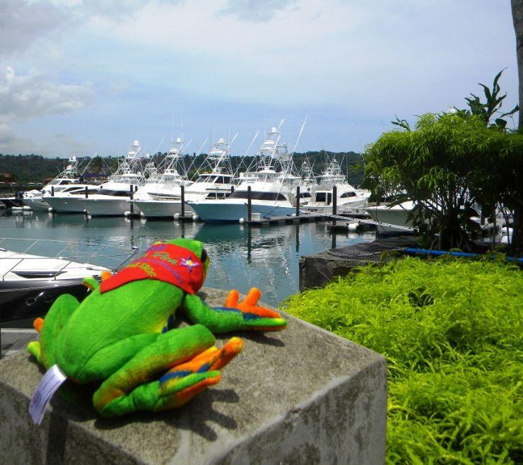 Javi the Frog admiring yachts at marina